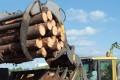 Le réveil de l'industrie du bois française